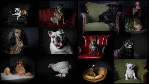 Glamour, senior, pets, and headshot sessions. Melissa M. Harden at Studio 21 in Mattoon, IL